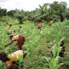 GHc 80 million CAPEX approved for agriculture sector